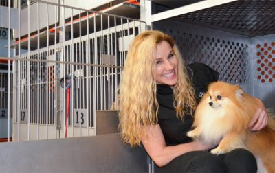 Tail Waggers Pet grooming Services Hollywood Florida